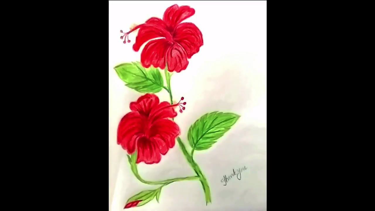 How to draw hibiscus flower youtube how to draw hibiscus flower izmirmasajfo