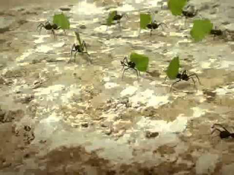 dul rahman bin nordin -kisah penuh inspirasi tentang semut