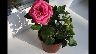 видео Розы для дам и не только