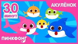Акулёнок туруру туру | +Сборник | Песни про Животных | Семья Акул | Пинкфонг песни для детей