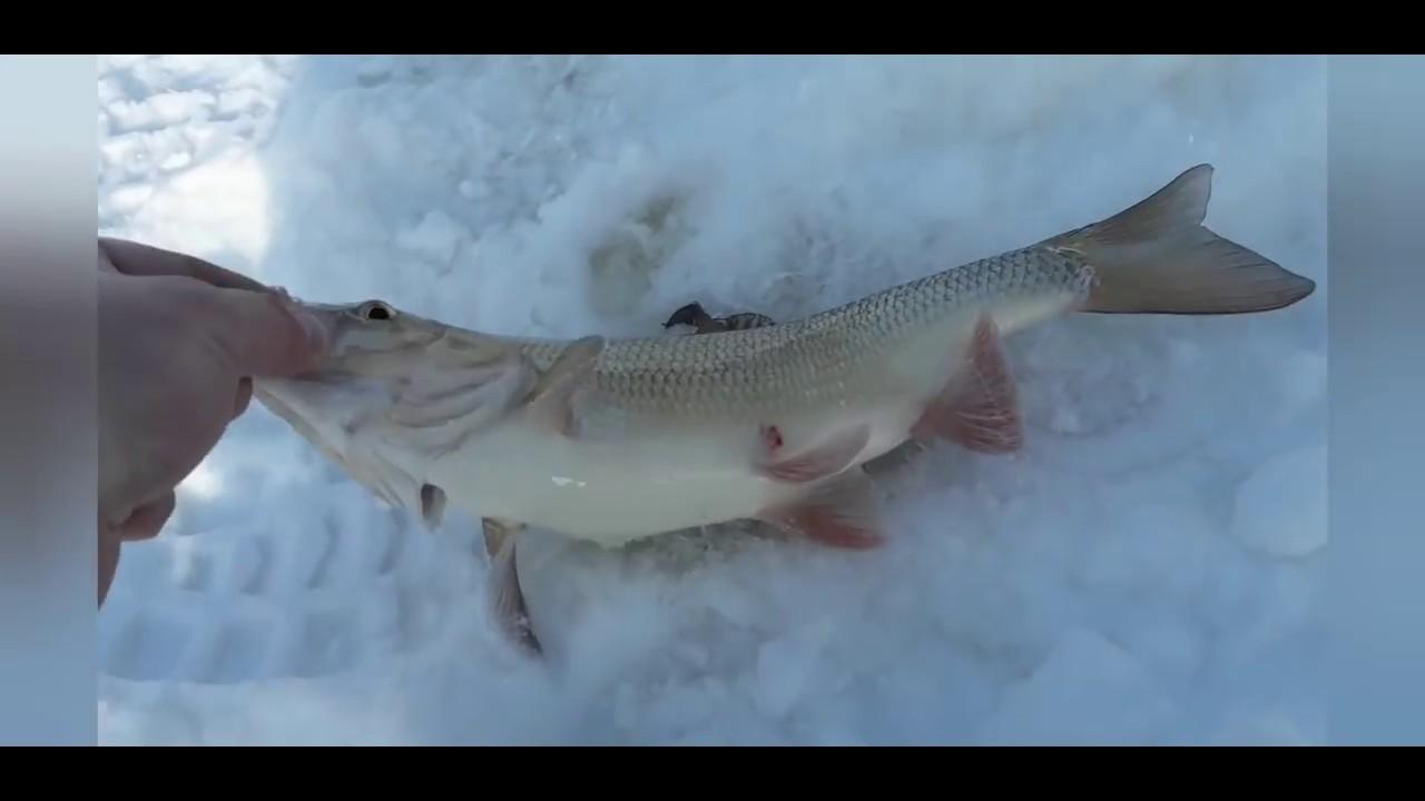 Ловля язя на реке зимой