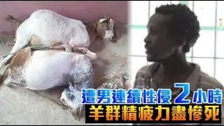肯亞一名35歲男子木鳥歐(Mbithi Munyao),欺負母親的2隻羊,甚至把這2隻...
