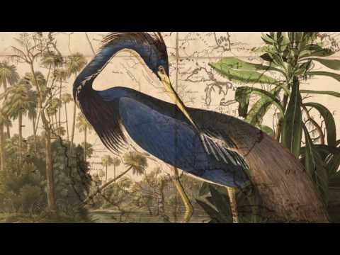 The Travels of John James Audubon