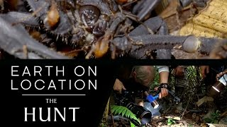 Hunting For Army Ants - The Hunt - #EarthOnLocation Vlog - BBC Earth Unplugged