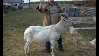 Kozy.wmv