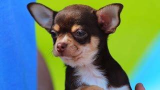 Выставка собак в Кривом Роге | 1kr.ua