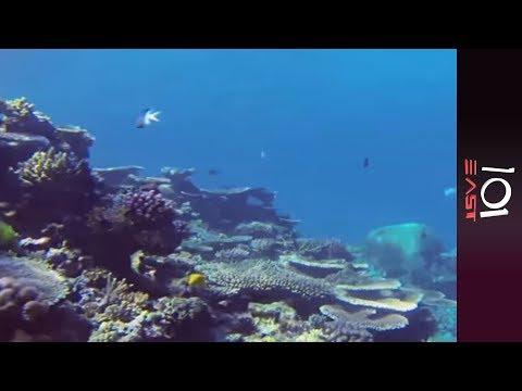 🇦🇺 Reef Race: Saving The Great Barrier Reef | 101 East