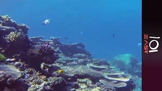 Reef Race: Saving The Great Barrier Reef - 101 East