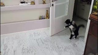 The Funniest Cat Walk Hop