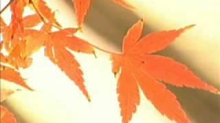 真咲よう子 - 月の雨