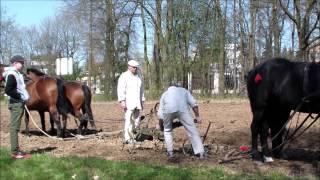 Pokaz orki konnej w Muzeum Wsi Lubelskiej - 12 kwietnia 2015 r.