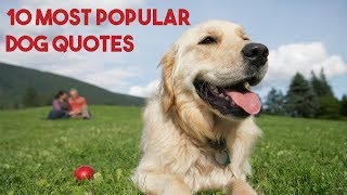 10 Most Popular Dog Quotes