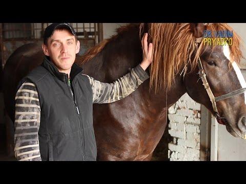 Столбняк у лошади.Вакцинация. Tetanus in horses. Vaccination.