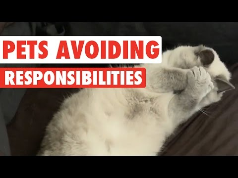 Pets Avoiding Responsibilities Video Compilation 2016