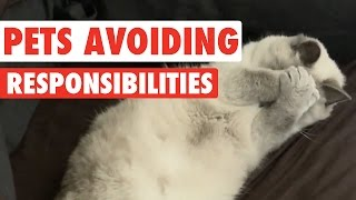 Pets Avoiding Responsibilities Video Compilation 2016