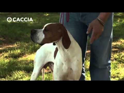 CACCIA TV SKY 235 - GUIDA ALL'ADDESTRAMENTO DEL CANE POINTER
