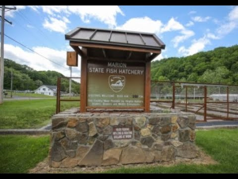 VDGIF State Fish Hatchery | Tour And Feeding | Open House Event
