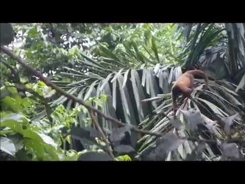 Yasuni: The Battle over Oil and Biodiversity in Ecuador´s Amazon