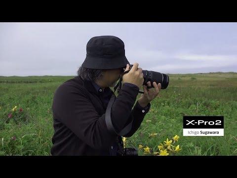 FUJIFILM X-Pro2: 菅原一剛 x サハリン(樺太)夏 /富士フイルム