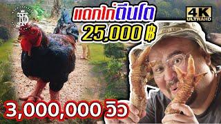 แดกไก่ตีนโต 25,000 ฿