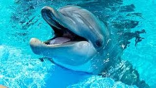 Dauphins merveilleux! relaxation music. Voyage with dolphins!-F. Amathy-Océan-Musique ...