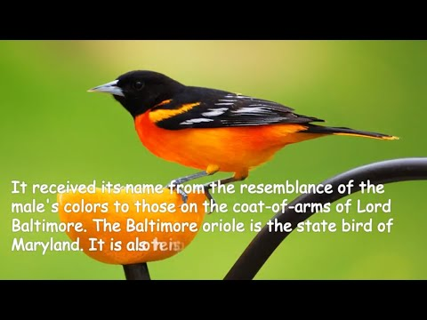 Amazing colourful birds Watch this video of beautiful birds.