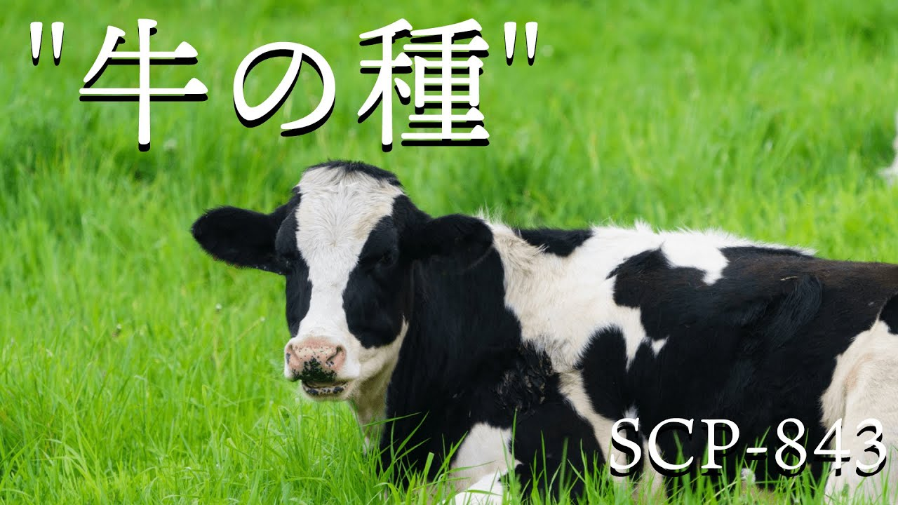 "【SCP紹介】SCP-843 ""牛の種""【結月ゆかり】"