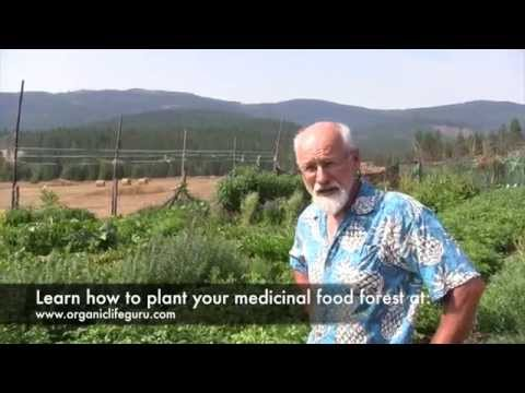 Tour a Food Forest 4 Months After Planting | Full Course at