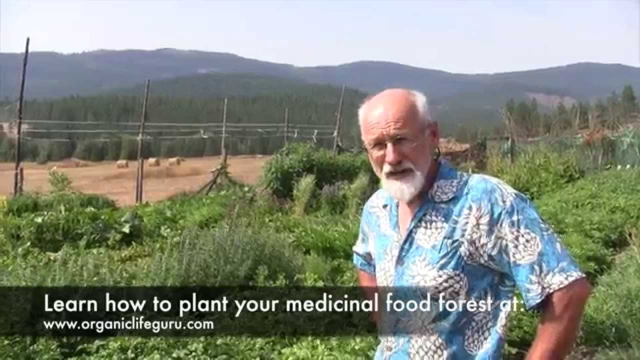 Tour a Food Forest 4 Months After Planting | Full Course at ...