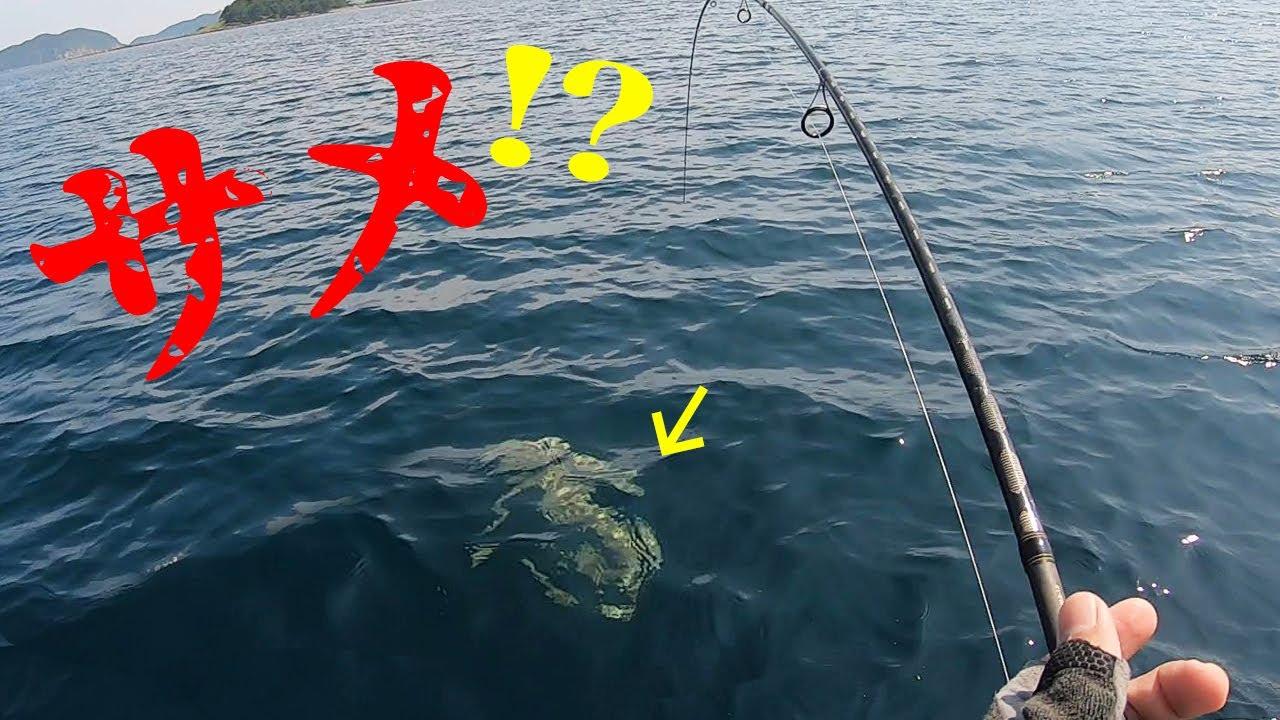 カヤックでサメが食いついてパニックに!?