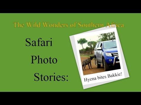 Safari Photo Stories: Hyena bites Bakkie