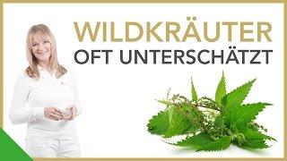 Wertvolle Wildkräuter   Dr. Petra Bracht   Gesundheit, Wissen
