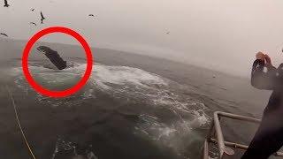 अचानक पानी में दिखी खौफनाक चीज | Most Shocking sea Animal Attacks