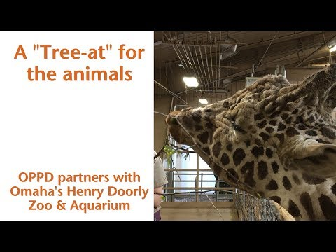 A Tree For All: OPPD and The Henry Doorly Zoo & Aquarium