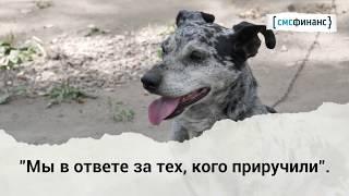 """Мы в ответе за тех, кого приручили (проект Базы реабилитации животных и """"Смсфинанс"""")"""