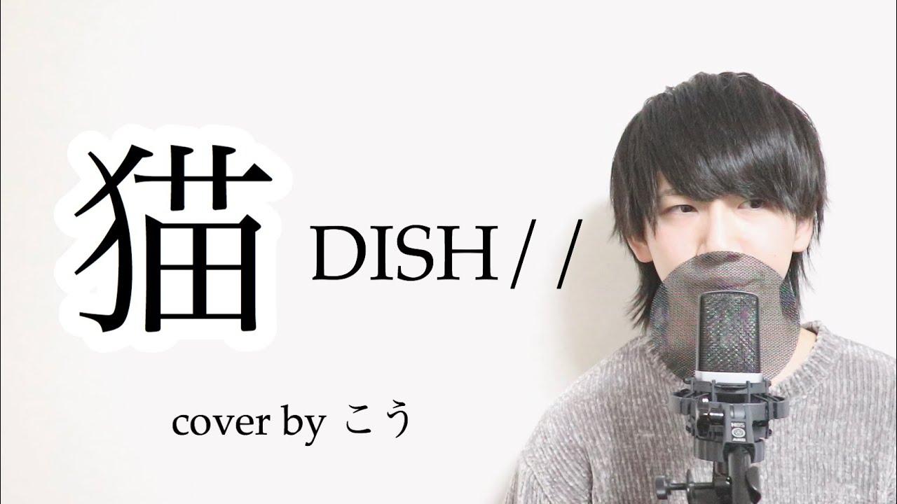 ディッシュ 歌詞 猫