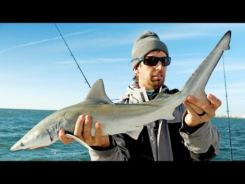 Fishing For BABY Sharks