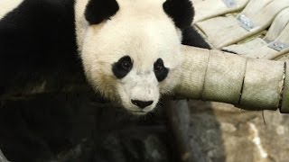 Goodbye, Bao Bao
