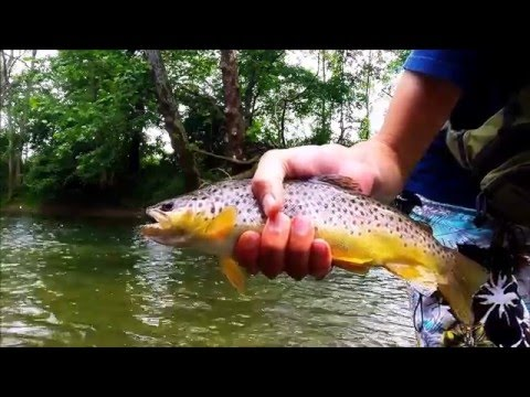 Mid-Ohio Trout Fishing
