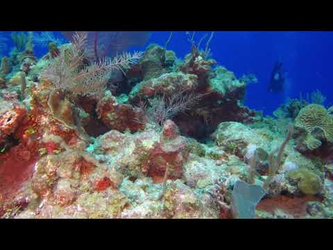 Grand Cayman 2018 | Princess Penny's Wall