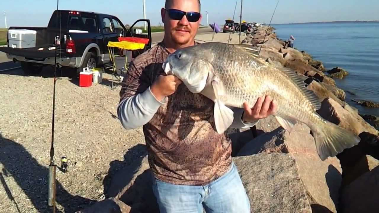 Texas city dike 2 16 13 darrell 39 s black drum catch and for Texas city fishing