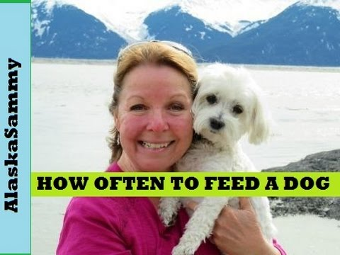 How Often Should You Feed Your Dog