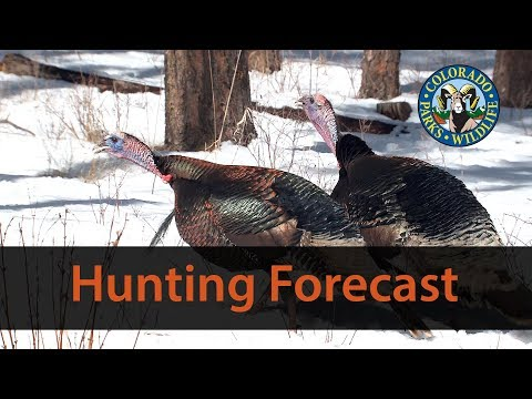 Colorado 2018 Turkey Hunting Forecast