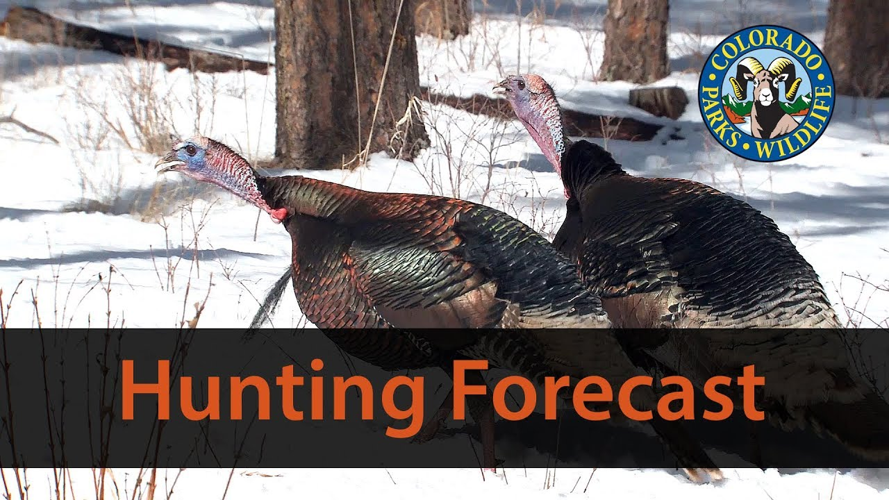 photograph about Printable Turkey Head Target called Colorado Parks Wildlife - Turkey Wanting