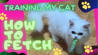 TRAINING MY CAT HOW TO FETCH