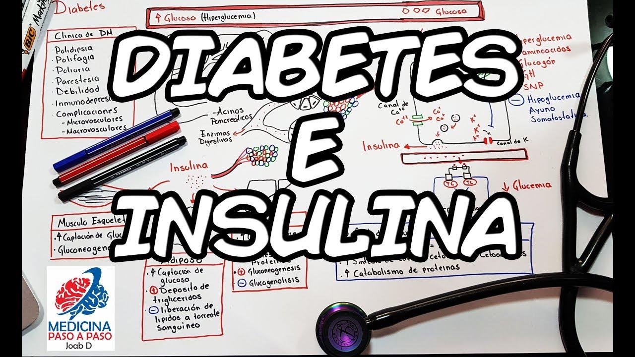 diabetes tipo páncreas e insulina