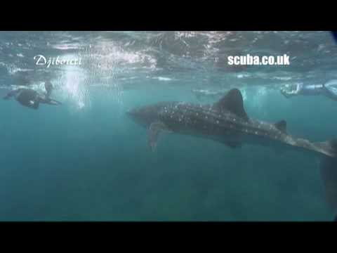Scuba Travel World Wide Holidays: Whalesharks in Djibouti
