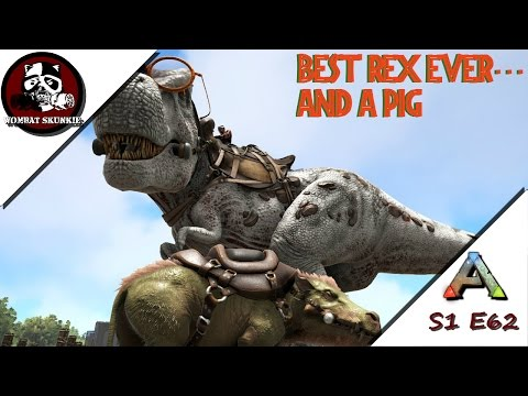 New Rex Leveling And A Pig Named Bacon