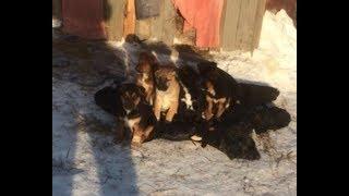 Серовские зоозащитники делают всё, чтобы найти убийцу семейства собак в районе улицы Пристанционной