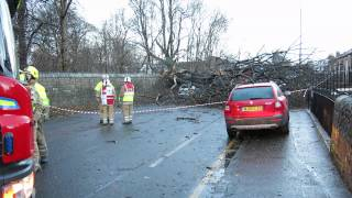 Car Hit by Fallen Tree